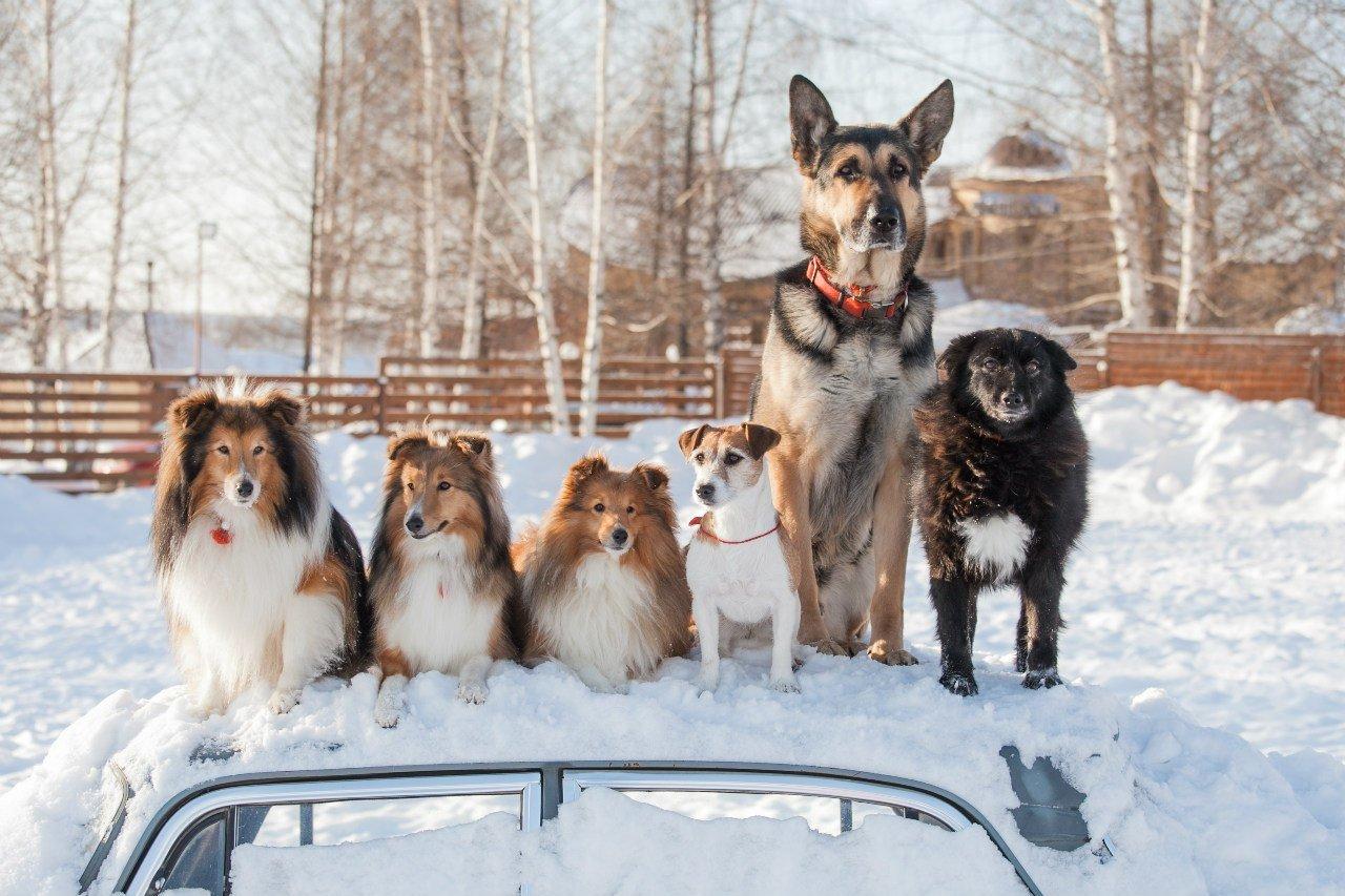 «Звезда Удмуртии» — в Ижевске пройдет выставка собак, фото-1