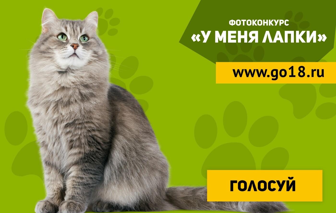 Голосование за участников проекта «У меня лапки» завершится 15 апреля, фото-1