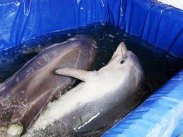 Голодовка против передвижного дельфинария продолжается в Ижевске, фото-1