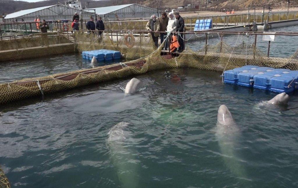 Ученые рассказали о состоянии косаток, выпущенных из «китовой тюрьмы», фото-1